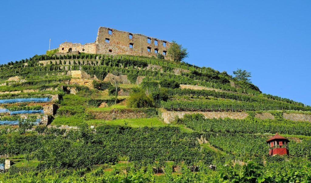 ワイン畑と丘の上の要塞