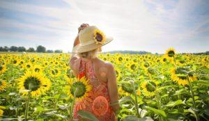 ひまわり畑と若い女性