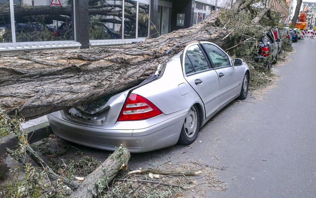 倒れた木でペシャンコにつぶれた車